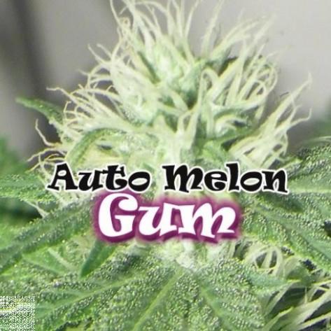 AUTO MELON GUM DR UNDERGROUND 4UN