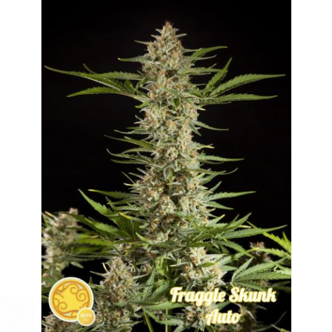 FRAGGLE SKUNK AUTO PHILOSOPHER 5UN