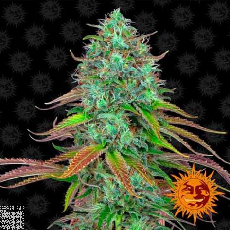 LSD AUTO BARNEY'S FARM 3UN
