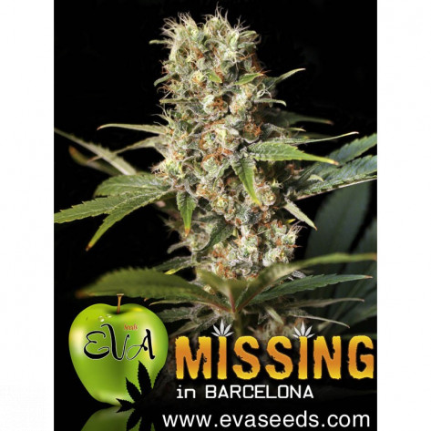 MISSING IN BARCELONA EVA SEEDS 3UN