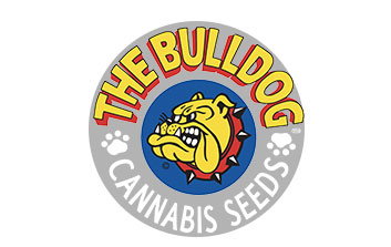 the bulldog seeds auto