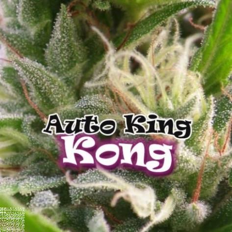 AUTO KING KONG DR UNDERGROUND 4UN