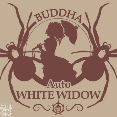 BUDDHA AUTO WHITE WIDOW BUDDHA SEEDS CLASSICS