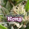 AUTO KING KONG DR UNDERGROUND 2UN