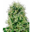 POWER PLANT SENSI WHITE LABEL 3UN