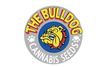 the bulldog seeds auto